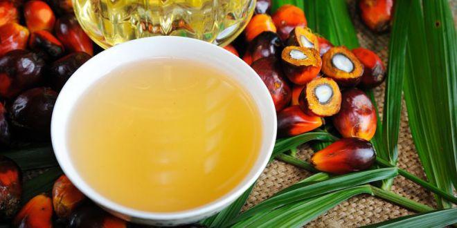 Чи корисна пальмова олія?