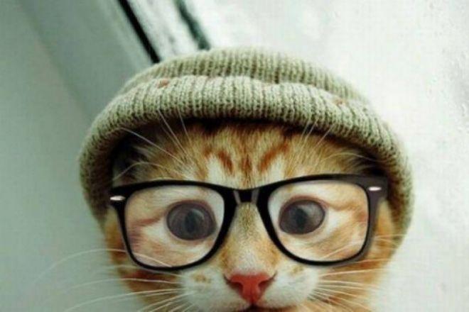 Шість захворювань, від яких вас вилікують коти