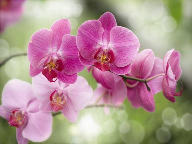 Орхидеи – почему стоит обратить внимание на сорт цветка?