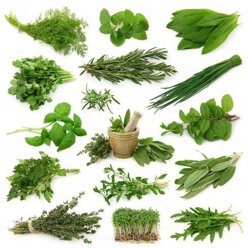 5 трав, які мусять бути на вашій кухні