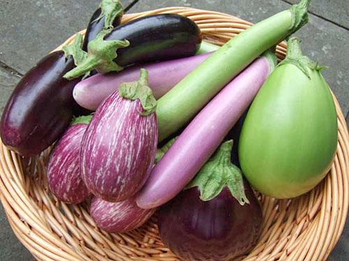 Баклажан – овоч липня. Готуй із задоволенням!