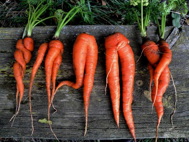 Три морквяні маски для омолодження шкіри