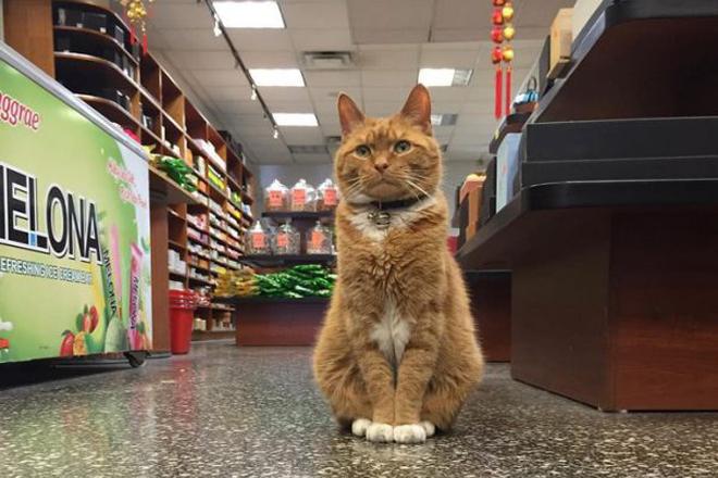 Рудий котик вже 10 років не пропускає жодного робочого дня [ФОТО]