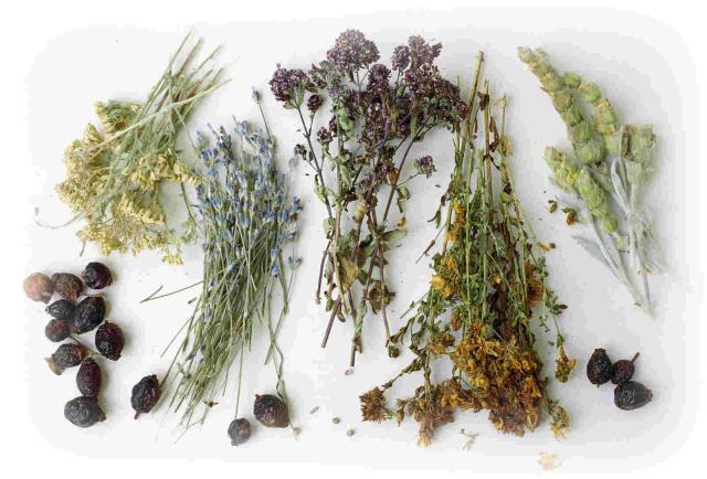 Целебные и полезные травы