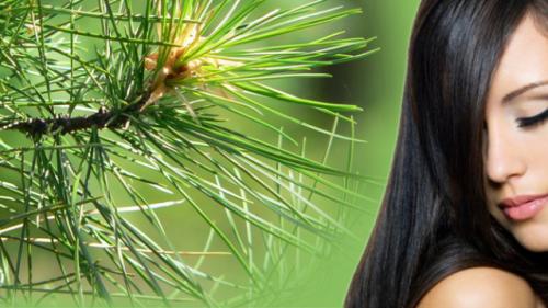 Кедрова маска: ваше волосся знову стане густим